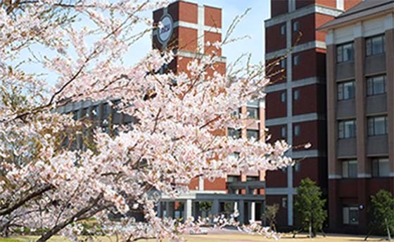 Cherry Blossoms in front of a building at Asia Pacific University (APU), Beppu, Japan