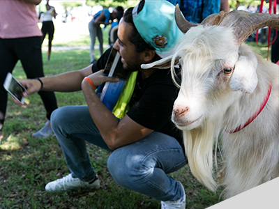 Student with goat during Hillfest