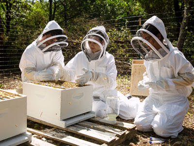 Students working with bee colonies on campus for research projects