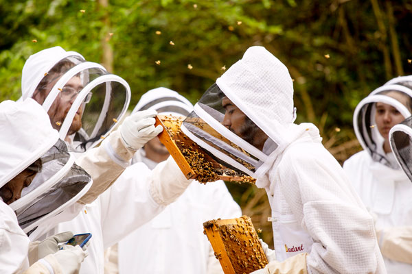 Students and their professor study bee colonies on campus