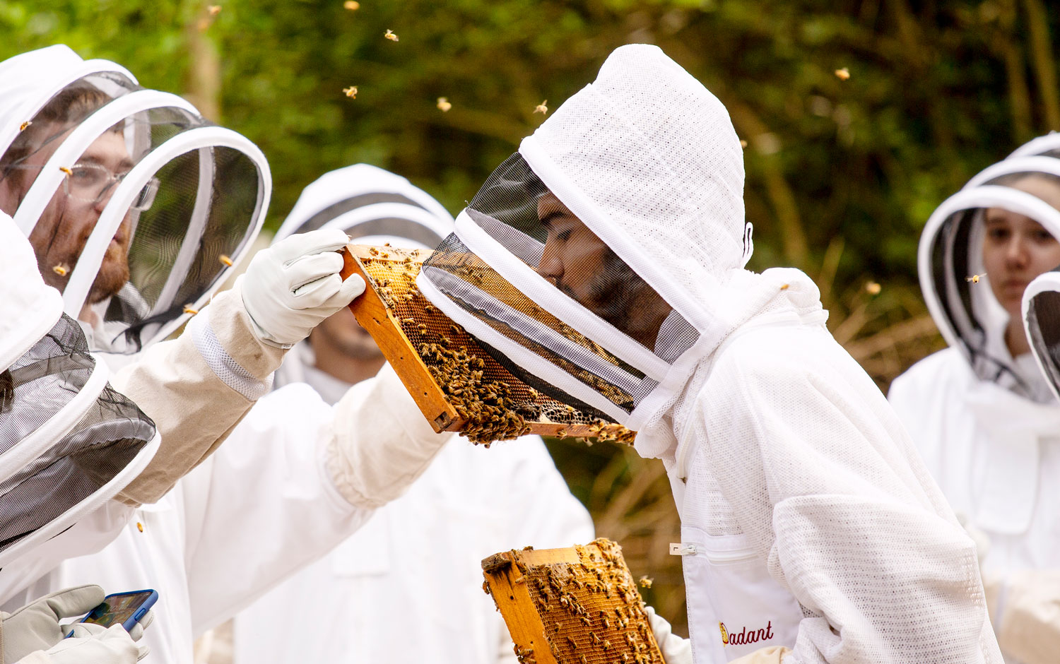 Students research beehives on campus at St. Edward's University