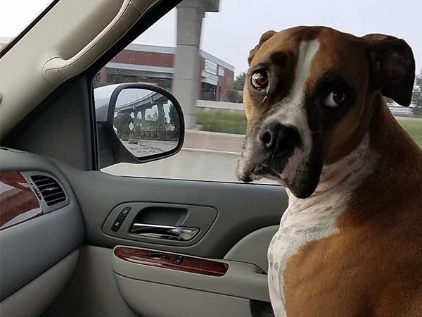 Marcos Gutierrez's dog
